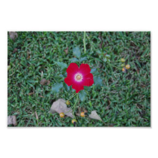 Backyard Rose Poster