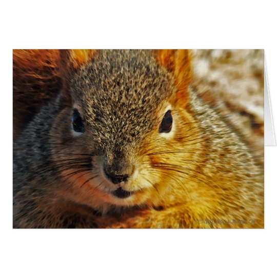 Backyard Squirrel Greeting cards