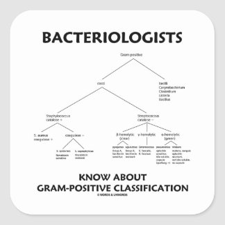 Bacteriologists Know Gram-Positive Classification Square Sticker