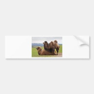 Bactrian Camels Bumper Sticker