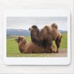 Bactrian Camels Mousemat