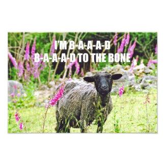 Bad Black Sheep Photo
