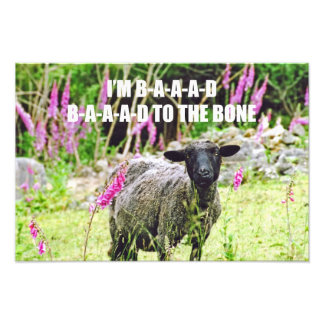 Bad Black Sheep Photographic Print