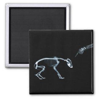 Bad Dog Xray Skeleton Black Blue Square Magnet