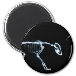 Bad Dog Xray Skeleton Black Blue 6 Cm Round Magnet