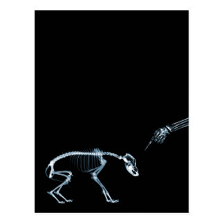 Bad Dog Xray Skeleton Black Blue Postcard