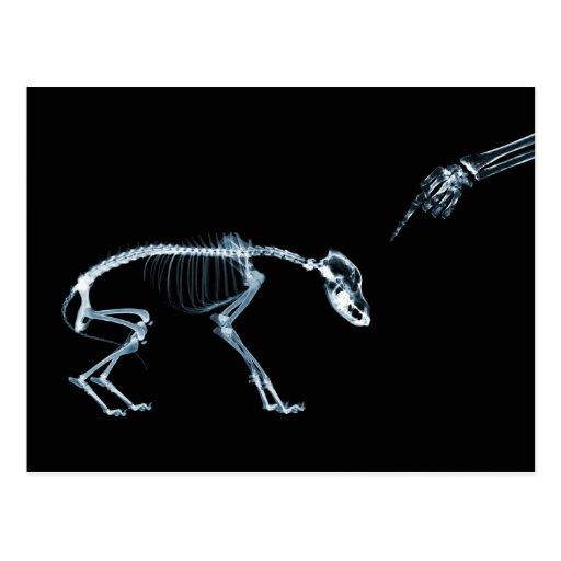 Bad Dog Xray Skeleton Black Blue Post Card