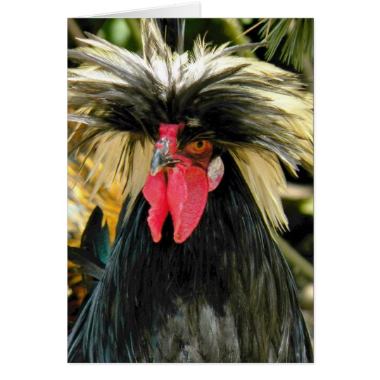 Bad Hair Chicken Photo Funny Birthday Card
