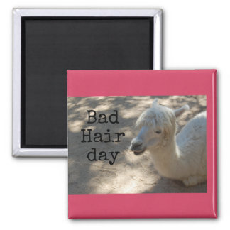 Bad hair day Alpaca magnet