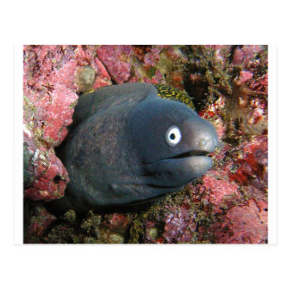 Bad Joke Eel Postcard