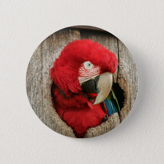 Badge green wing macaw red parrot in barrel