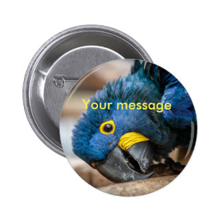 Badge pin button blue Hyacinth macaw parrot