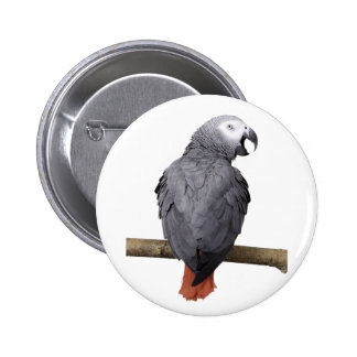 Badge with African Grey Parrot talking