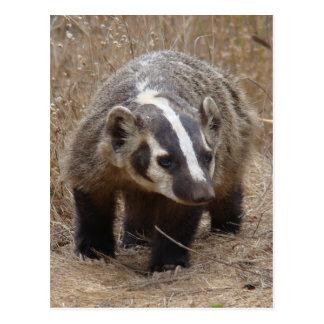 Badger Approach Postcard