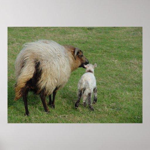 Badgerface Ewe with lamb Print
