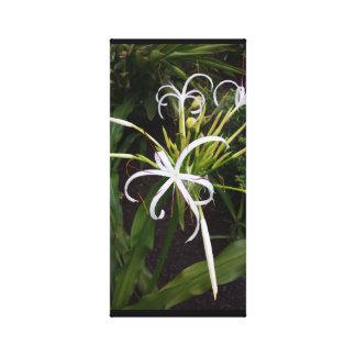 Bahama Mama Flower Canvas Print