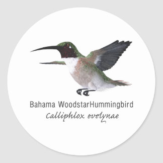Bahama Woodstar Hummingbird with Name Classic Round Sticker