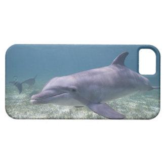 Bahamas, Grand Bahama Island, Freeport, Captive 2 Barely There iPhone 5 Case