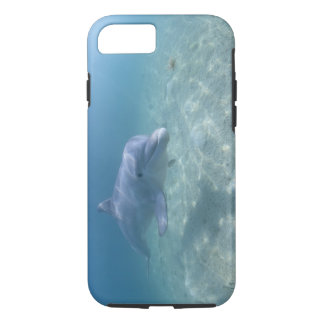 Bahamas, Grand Bahama Island, Freeport, Captive 3 iPhone 8/7 Case