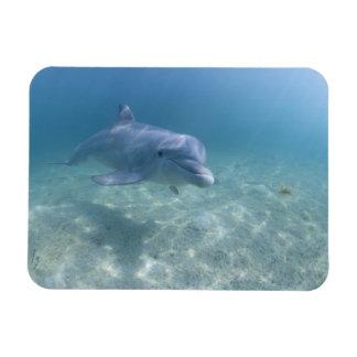 Bahamas, Grand Bahama Island, Freeport, Captive 3 Magnet