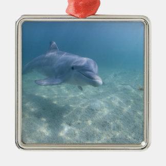 Bahamas, Grand Bahama Island, Freeport, Captive 3 Silver-Colored Square Decoration