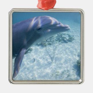 Bahamas, Grand Bahama Island, Freeport, Captive 4 Silver-Colored Square Decoration