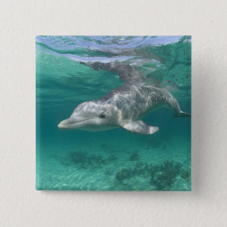 Bahamas, Grand Bahama Island, Freeport, Captive 5 15 Cm Square Badge