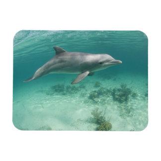 Bahamas, Grand Bahama Island, Freeport, Captive 6 Rectangular Photo Magnet