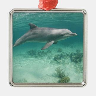 Bahamas, Grand Bahama Island, Freeport, Captive 6 Silver-Colored Square Decoration