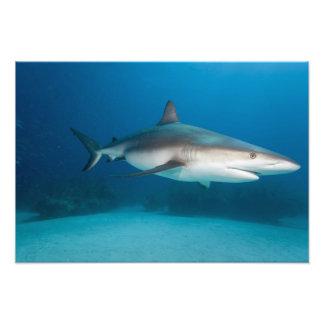Bahamas, Grand Bahama Island, Freeport, Photo Print