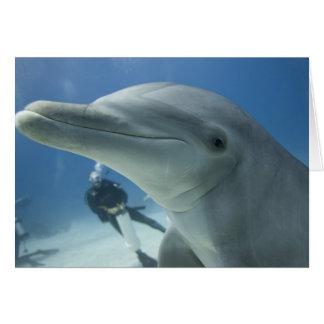 Bahamas, Grand Bahama Island, Freeport, Scuba 2 Card