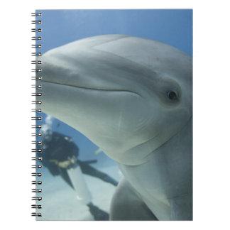 Bahamas, Grand Bahama Island, Freeport, Scuba 2 Notebooks
