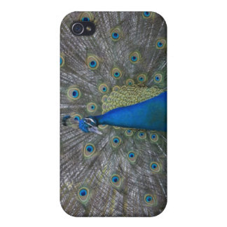 Bahamas, New Providence Island, Nassau, Male iPhone 4/4S Cases
