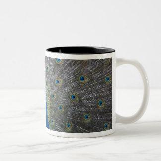 Bahamas, New Providence Island, Nassau, Male Two-Tone Coffee Mug