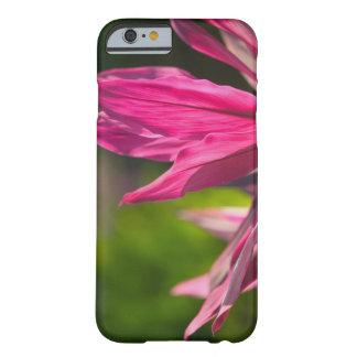 BAHAMAS, New Providence Island, Nassau: Paradise Barely There iPhone 6 Case