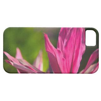 BAHAMAS, New Providence Island, Nassau: Paradise iPhone 5 Cases
