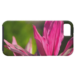 BAHAMAS, New Providence Island, Nassau: Paradise iPhone 5 Cover