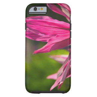 BAHAMAS, New Providence Island, Nassau: Paradise Tough iPhone 6 Case