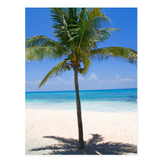 Bahamas Palm Tree Postcard