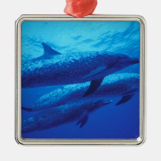 Bahamas, Spotted dophins. Silver-Colored Square Decoration
