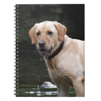 Bailey Spiral Note Books