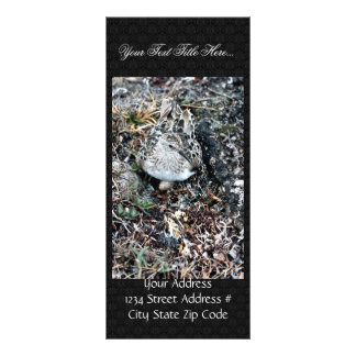 Baird s Sandpiper on Nest Personalized Rack Card