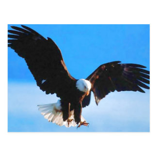 Bald American Eagle Post Card