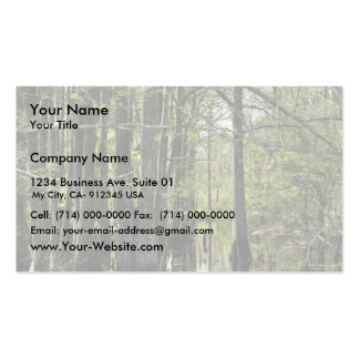 Bald cypress trees in swamp business card