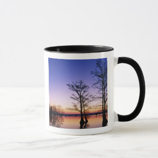 Bald cypress trees silhouetted at sunset, mug