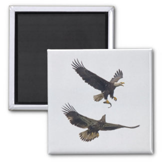 Bald Eagle 11 Magnet