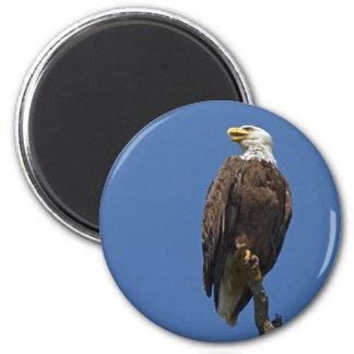 Bald Eagle 4 6 Cm Round Magnet
