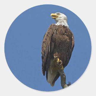 Bald Eagle 4 Classic Round Sticker