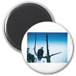 Bald Eagle 6 Cm Round Magnet