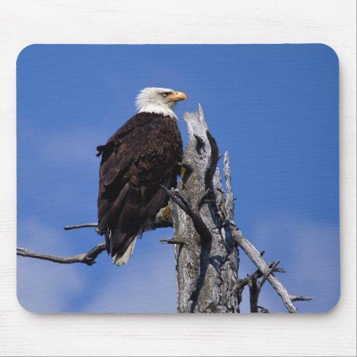 Bald Eagle 9219 Mouse Pad
